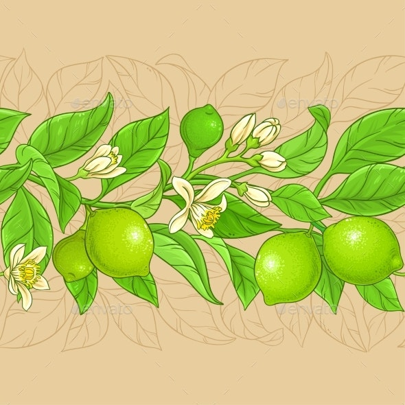 Lime Branches Vector Pattern on Color Background - Food Objects