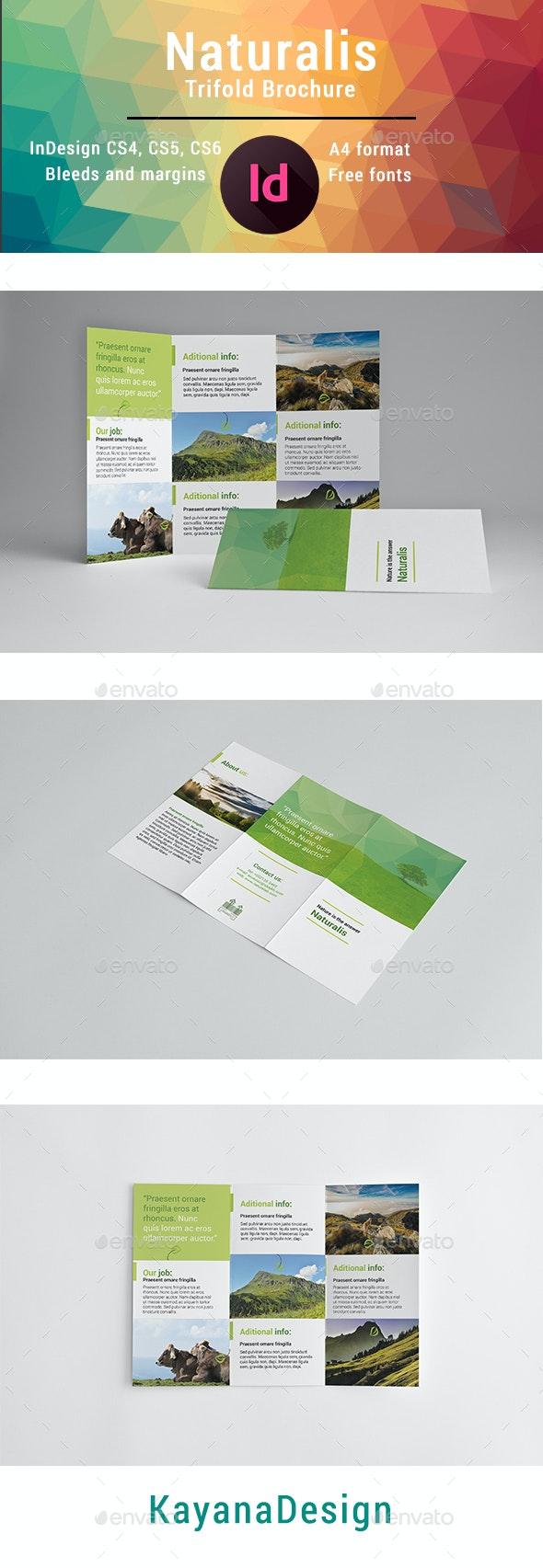 Naturalis Trifold Brochure - Brochures Print Templates