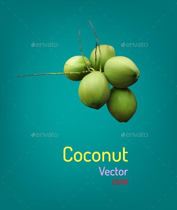 Coconut - Flowers & Plants Nature