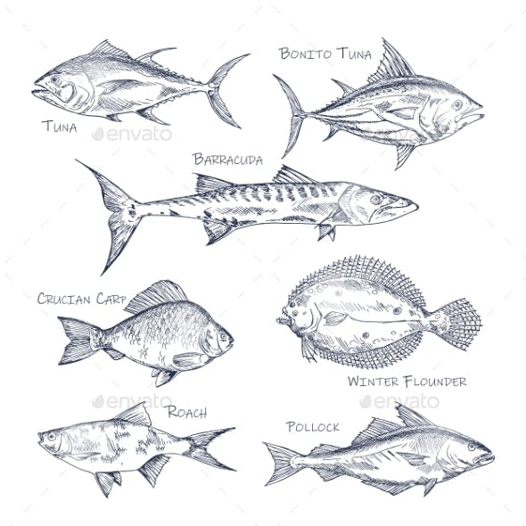 Set of Isolated Fish