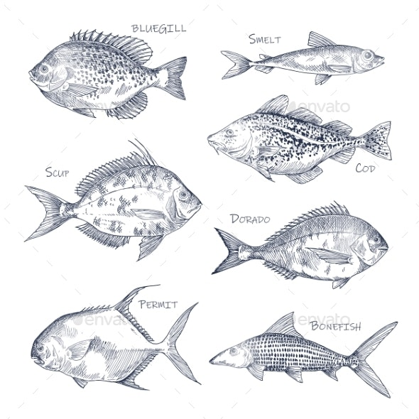 Seafood Sketch or Set of Isolated Hand Drawn Fish - Animals Characters