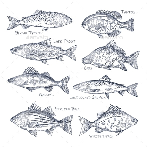 Side View on Fish Sketches - Animals Characters