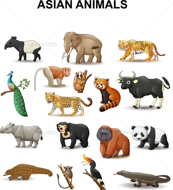 Asian Animals - Animals Characters