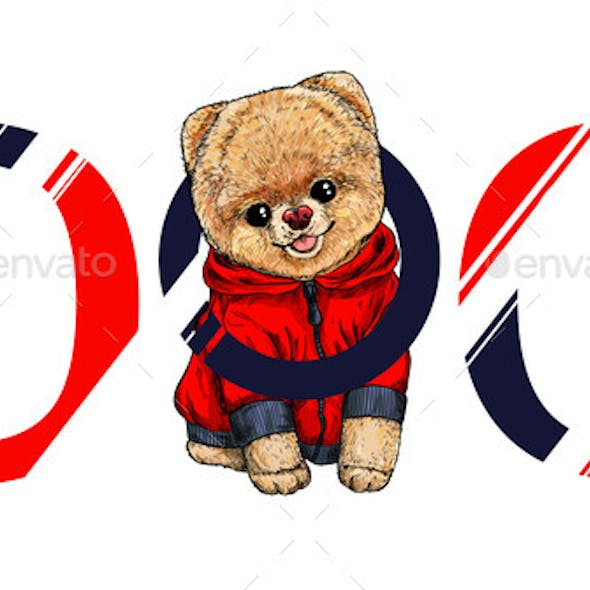 Pomeranian Toy Dog in Red Hoodie