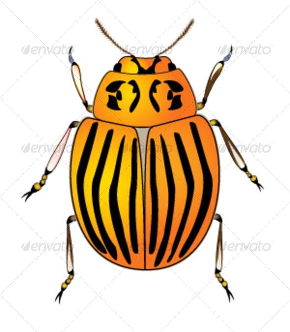 Colorado potato beetle - Animals Characters
