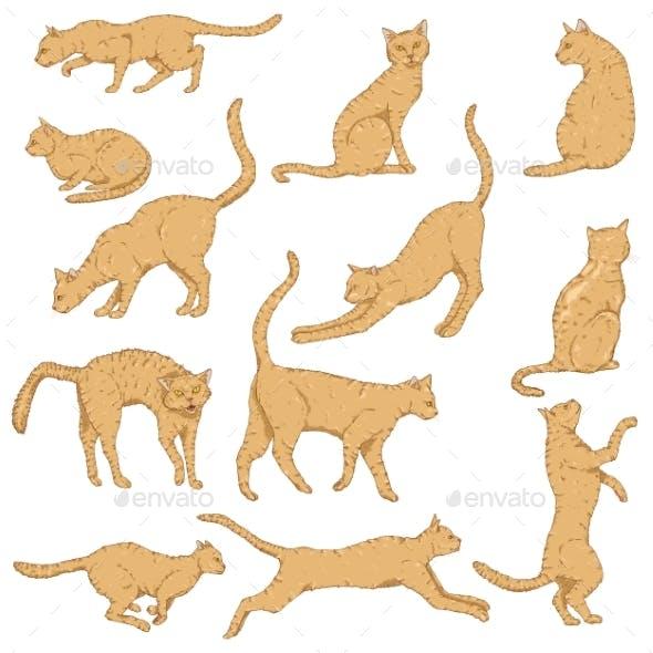 Vector Cartoon Set of Cats. Different Feline Poses