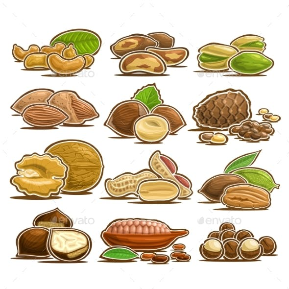 Vector Set of Nuts