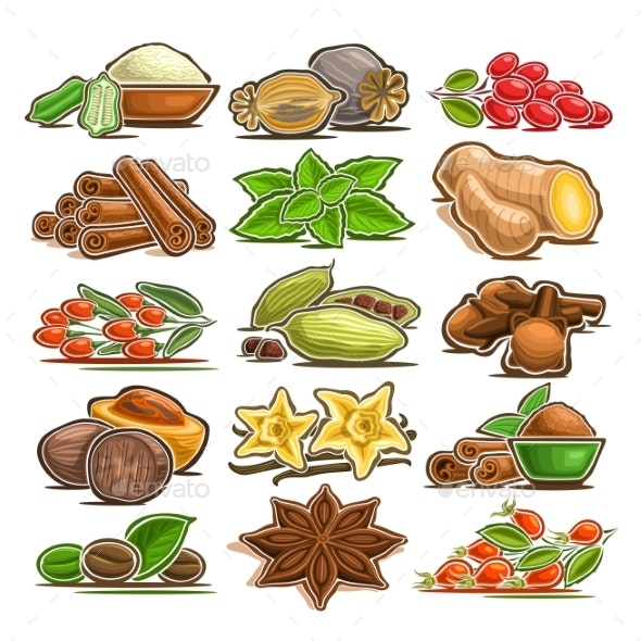 Vector Set of Indian Spices - Food Objects