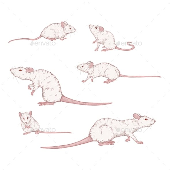 Vector Set of Cartoon White Rats and Mouses