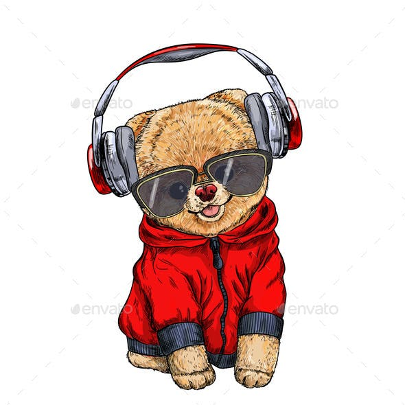 Pomeranian Toy Dog Dressed in Red Hoodie