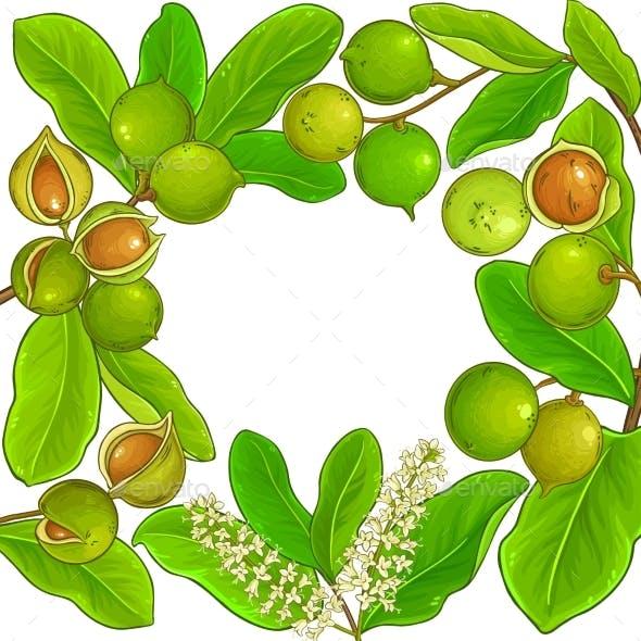 Macadamia Branches Vector Frame