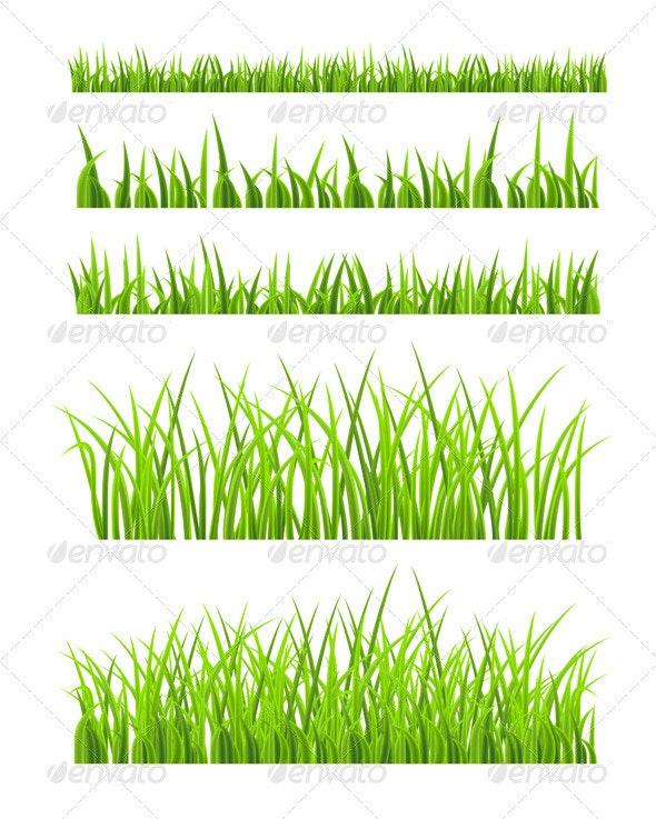 Green Grass - Seasons Nature