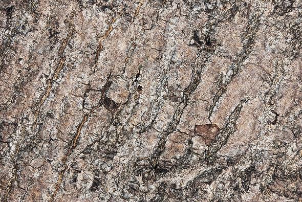 Ash Bark - Wood Textures