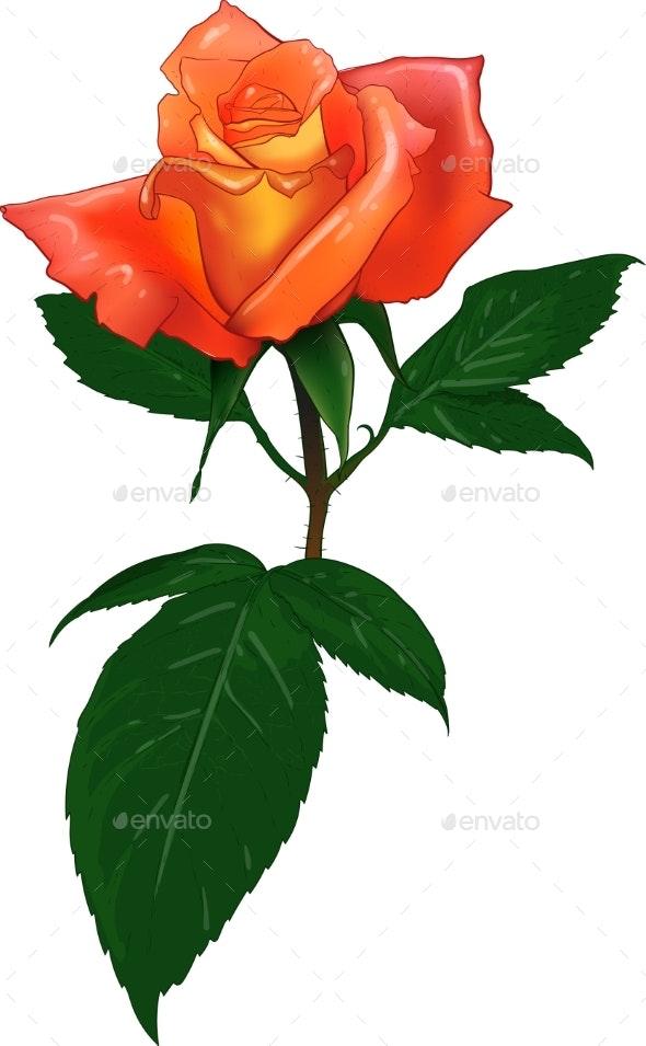 Color Vector Rose - Flowers & Plants Nature