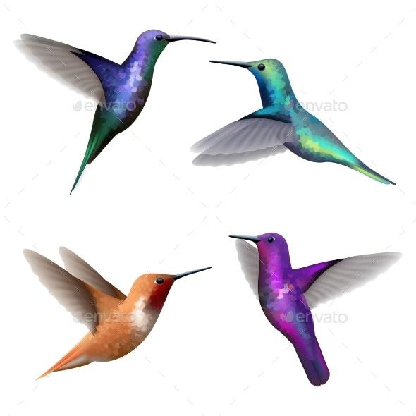 Hummingbirds - Animals Characters