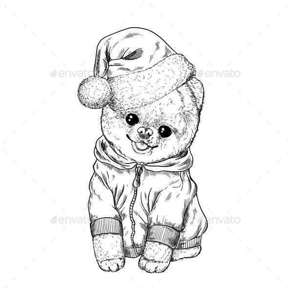 Pomeranian Toy Dig Dressed in Hoodie and Santa Hat