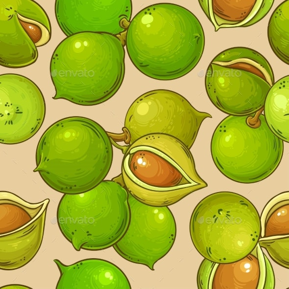 Macadamia Nuts Vector Pattern on Color Background - Food Objects