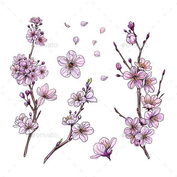Sakura in Bloom - Flowers & Plants Nature