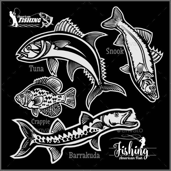 Tuna Snook Crappie and Barrakuda - Miscellaneous Vectors