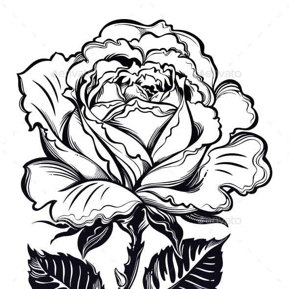 Vintage Floral Hand Drawn Rose with Leaves