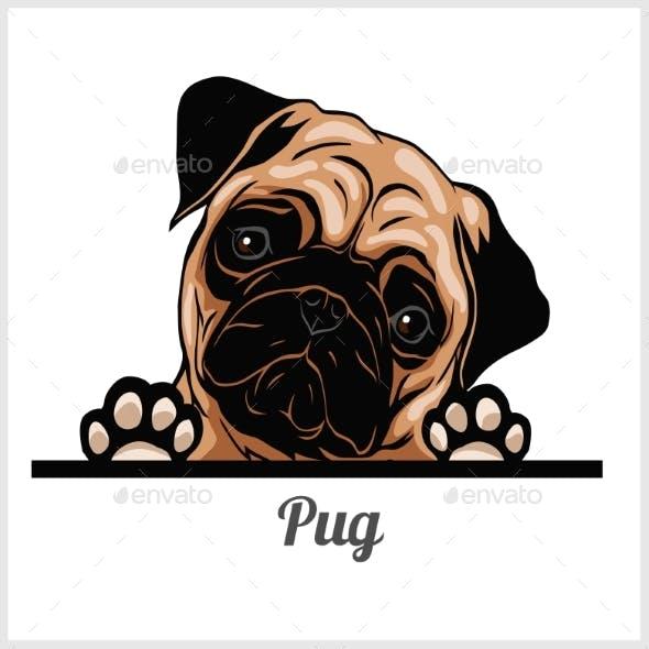 Pug - Peeking Dogs