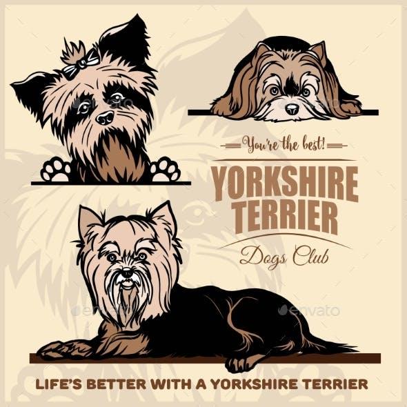 Yorkshire Terrier Vector Set