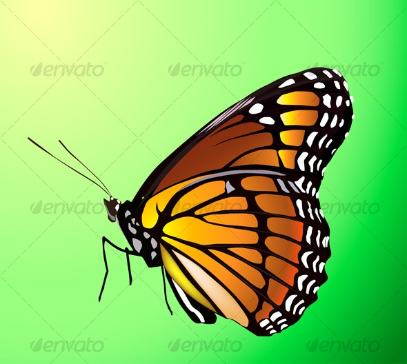 Vector butterfly - Miscellaneous Characters