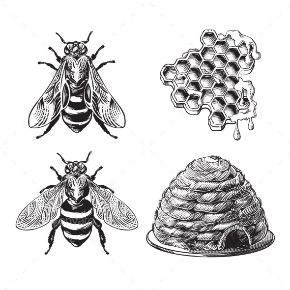 Set of Bee, Wasp, Honeycombs and Hive Vintage Drawing - Animals Characters