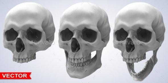 Detailed Graphic Photorealistic Human Skulls Set - Miscellaneous Vectors