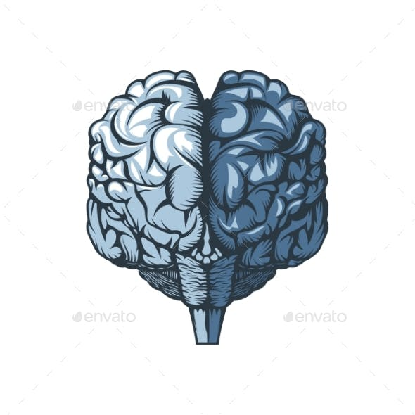 Human Brain on a White Background Freehand Drawing