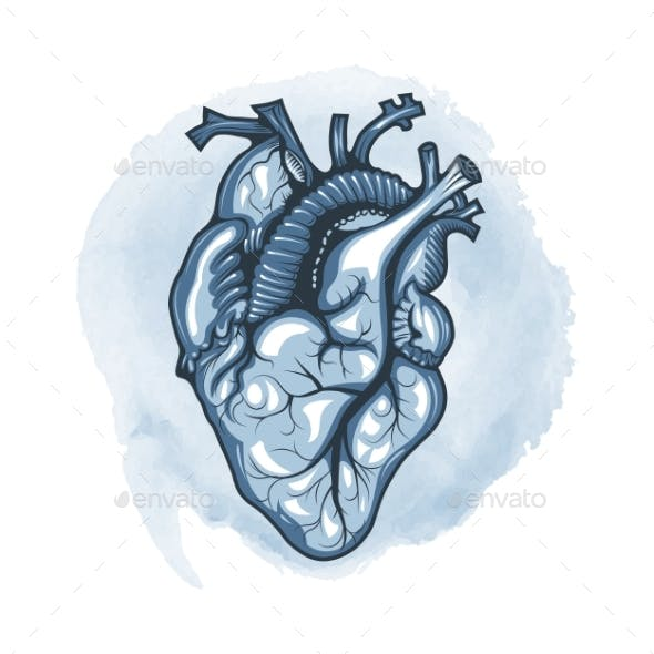 Human Heart Drawn in Detail on a Watercolor Loop