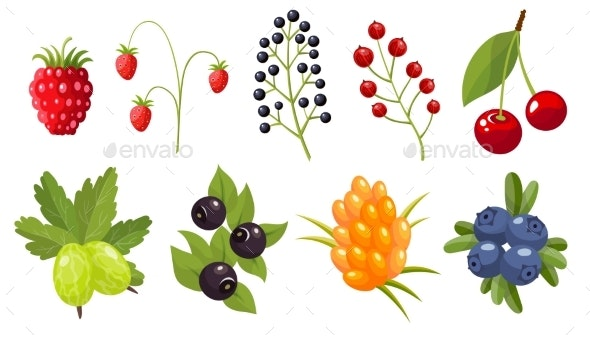 Collection of Twigs of Wild Berries - Food Objects
