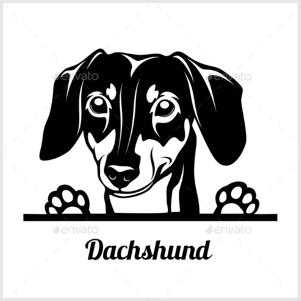 Dog Head Dachshund Breed Black and White - Animals Characters