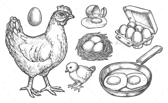 Sketch Chicken Products and Farm Poultry Eggs - Animals Characters
