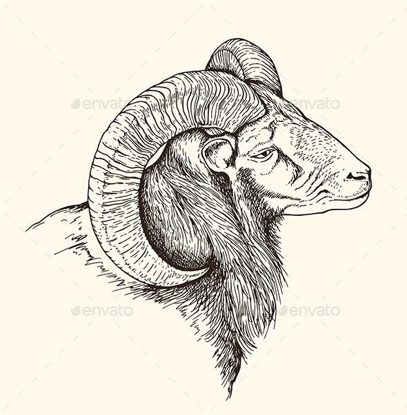 Mountain Bighorn Sheep - Animals Characters