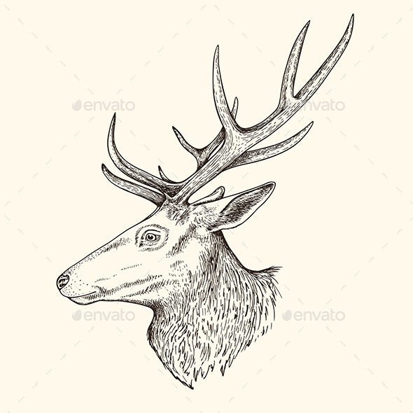 Hand Drawn Illustration of Deer - Animals Characters