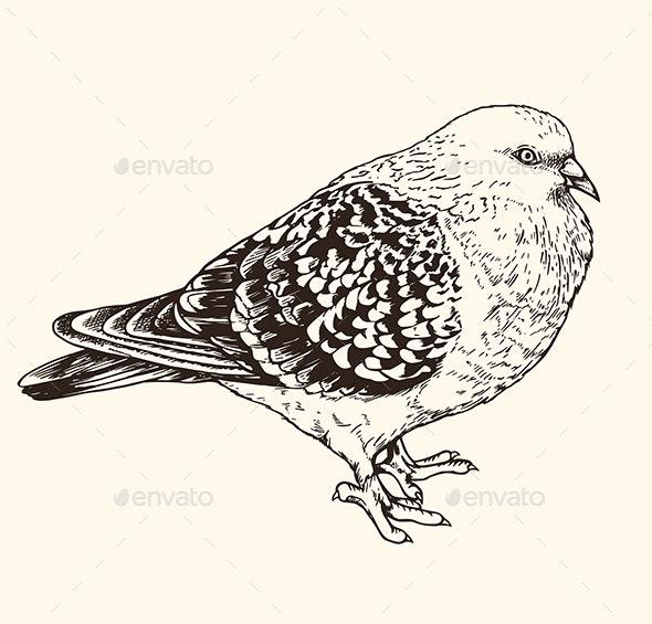 Hand Drawn Illustration of Urban Pigeon - Animals Characters