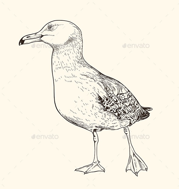 Hand Drawn Illustration of Seagull - Animals Characters