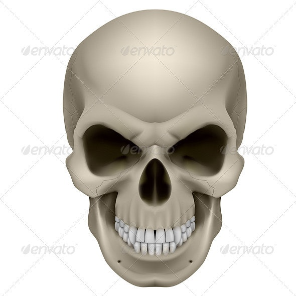 Human Skull - Miscellaneous Characters