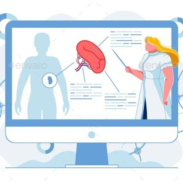Human Spleen Structure Study Vector Illustration