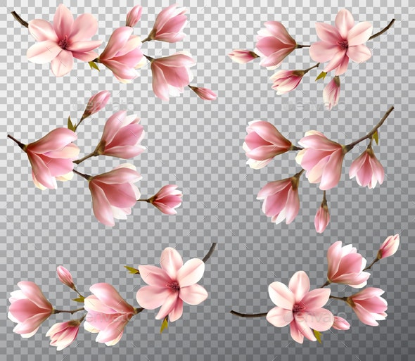 Collection With Magnolia Branches Vector - Flowers & Plants Nature
