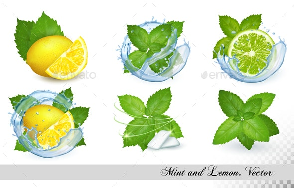 Mint and Melissa Leaves With Lemon and Lime in Splash of Water Vector Set - Food Objects