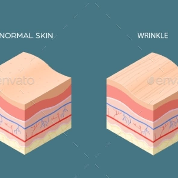 Wrinkle and Normal Skin Cross-section of Human