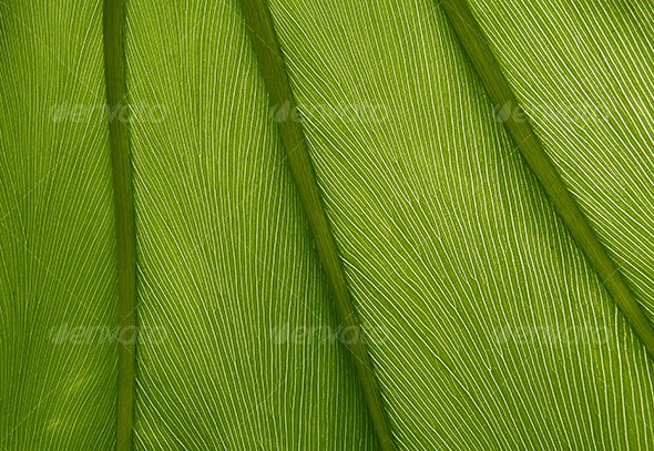 Green leaf texture 05 - Nature Textures