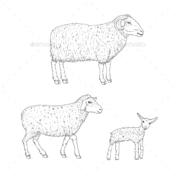 Vector Set of Sketch Ram Sheep and Lamp