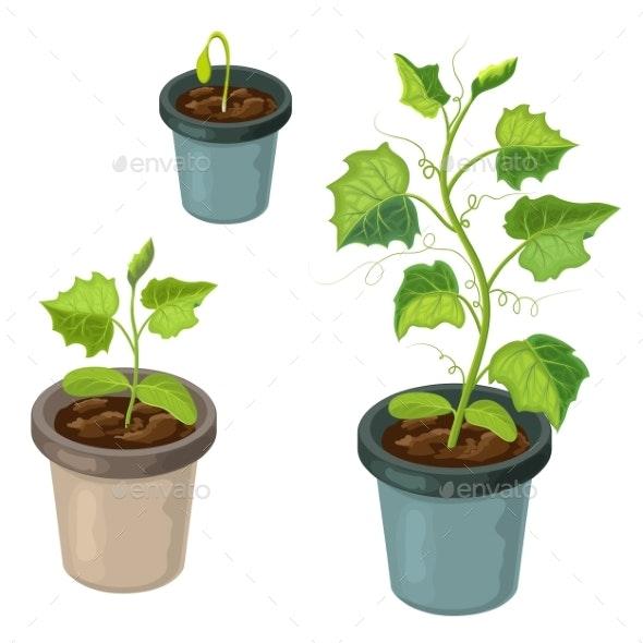 Cucumber Plant - Flowers & Plants Nature