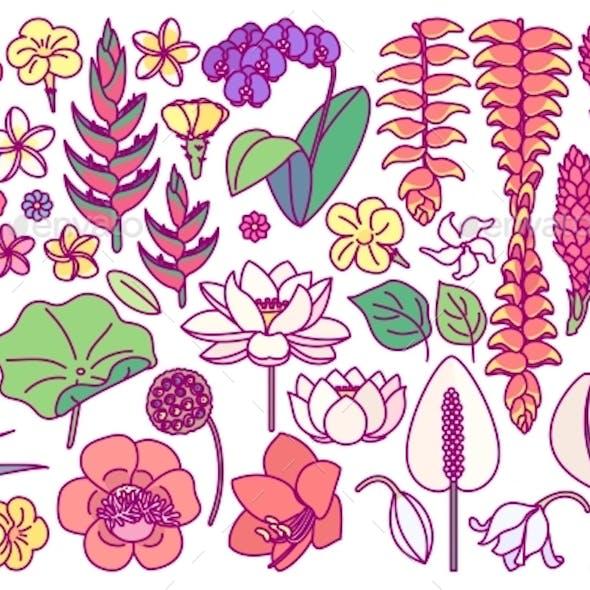 Vector Drawn Plant Clipart