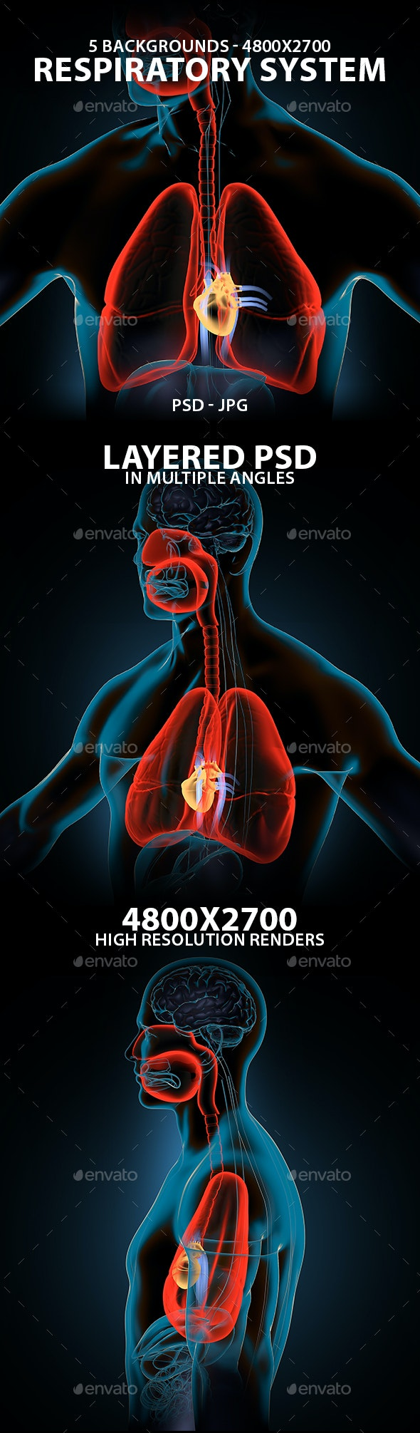 Respiratory System - Miscellaneous 3D Renders
