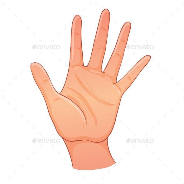 Open Hand. Human Palm. Hand Drawn Illustration