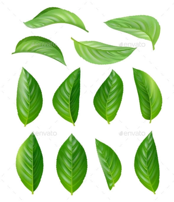 Green Tea Leaves By Onyxprj Graphicriver